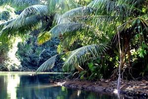 palétuviers, mangrove guadeloupe