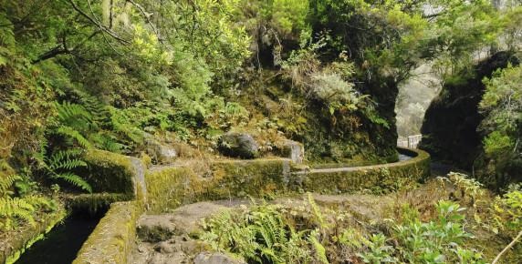 Cascade Martinique